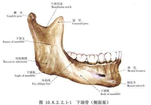 磨骨截骨有哪些区别?